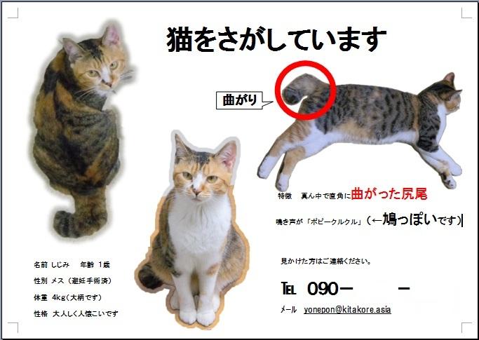迷子猫の広告