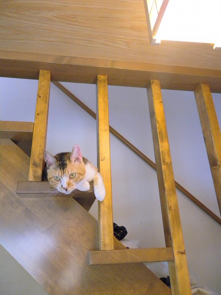 階段の しじ実