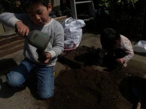 子供らと種まき